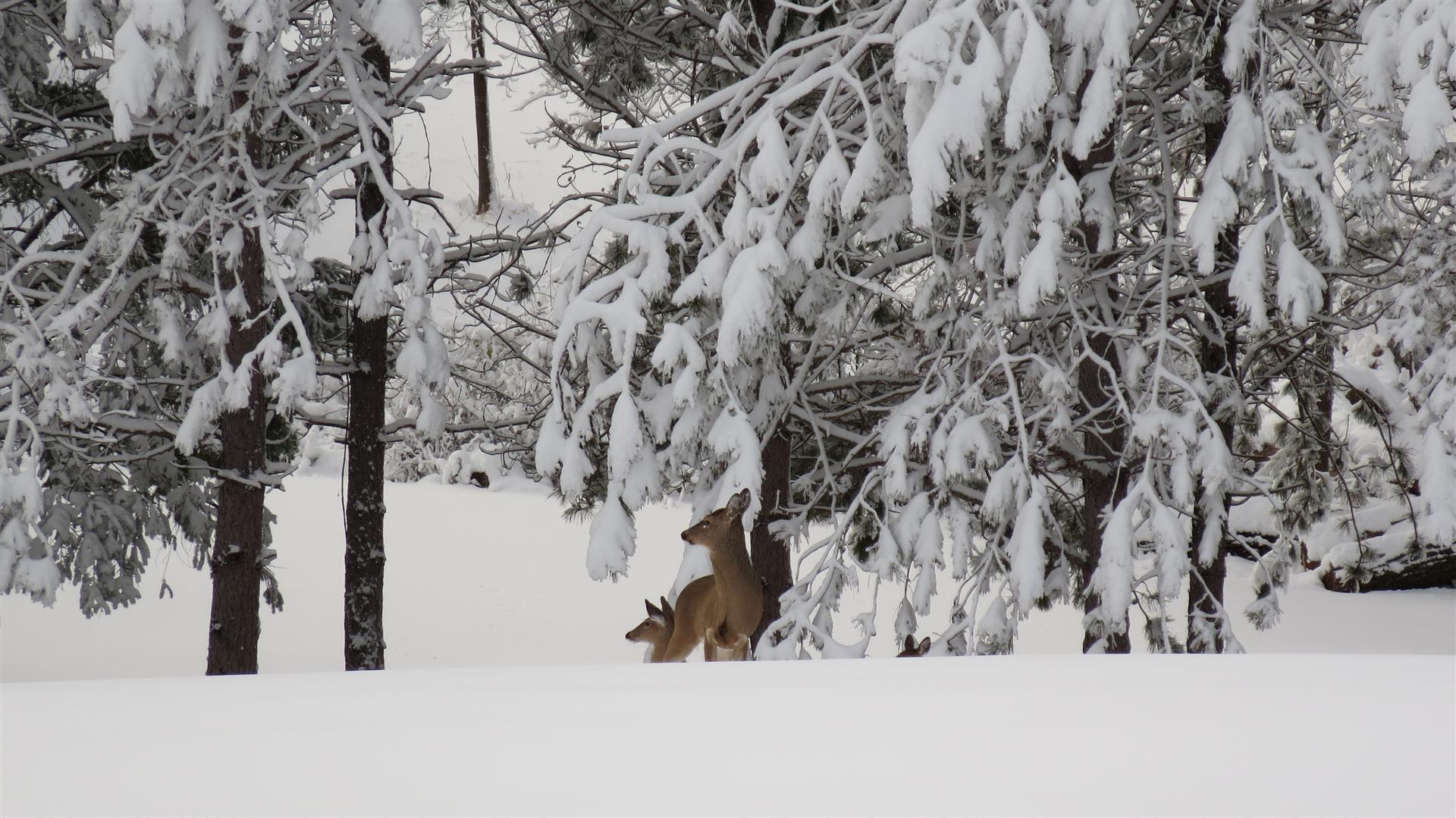 Deer Zoom - 3