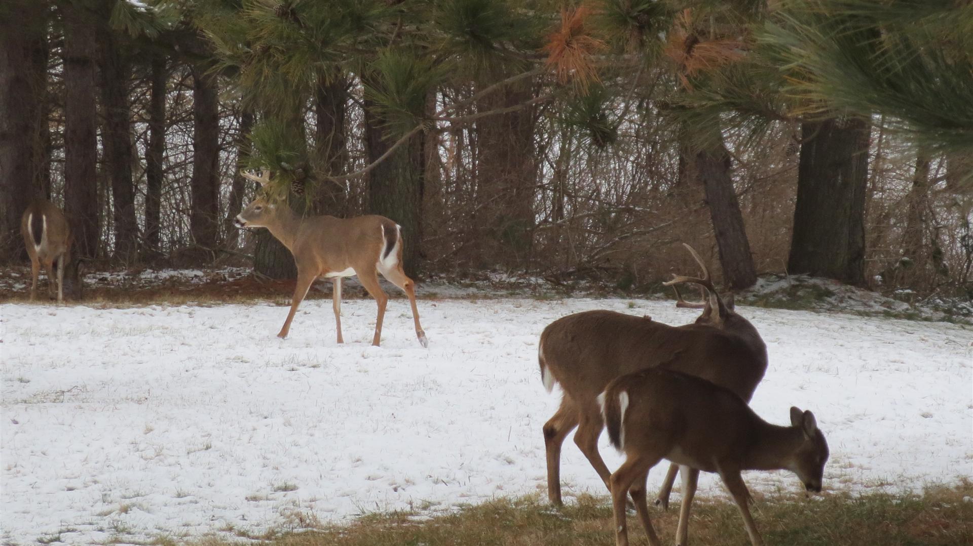 Bucks-45
