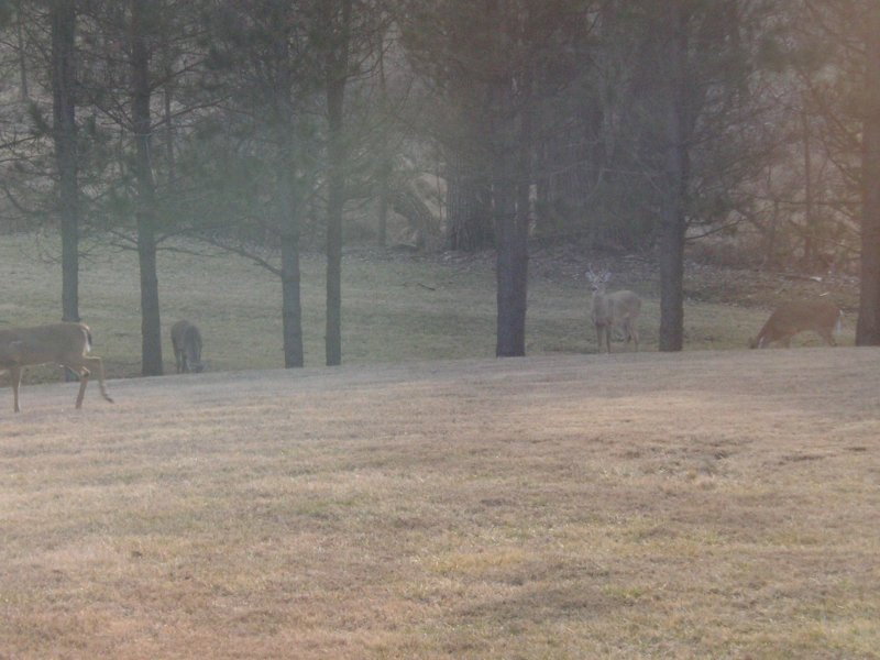 photos of deer bucks in backyard of home with acreage