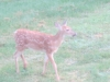 fawn-by-well-3
