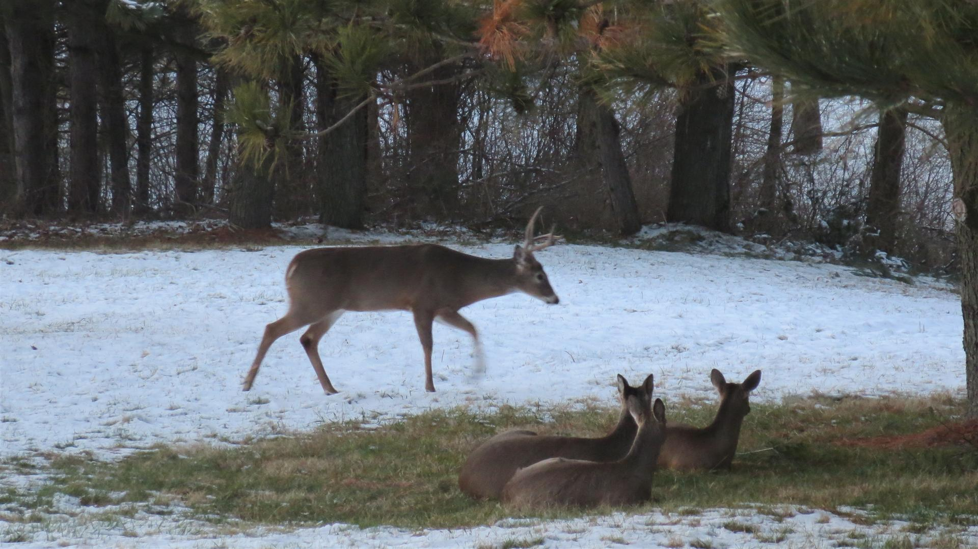 3 Does Watching Buck Walk By
