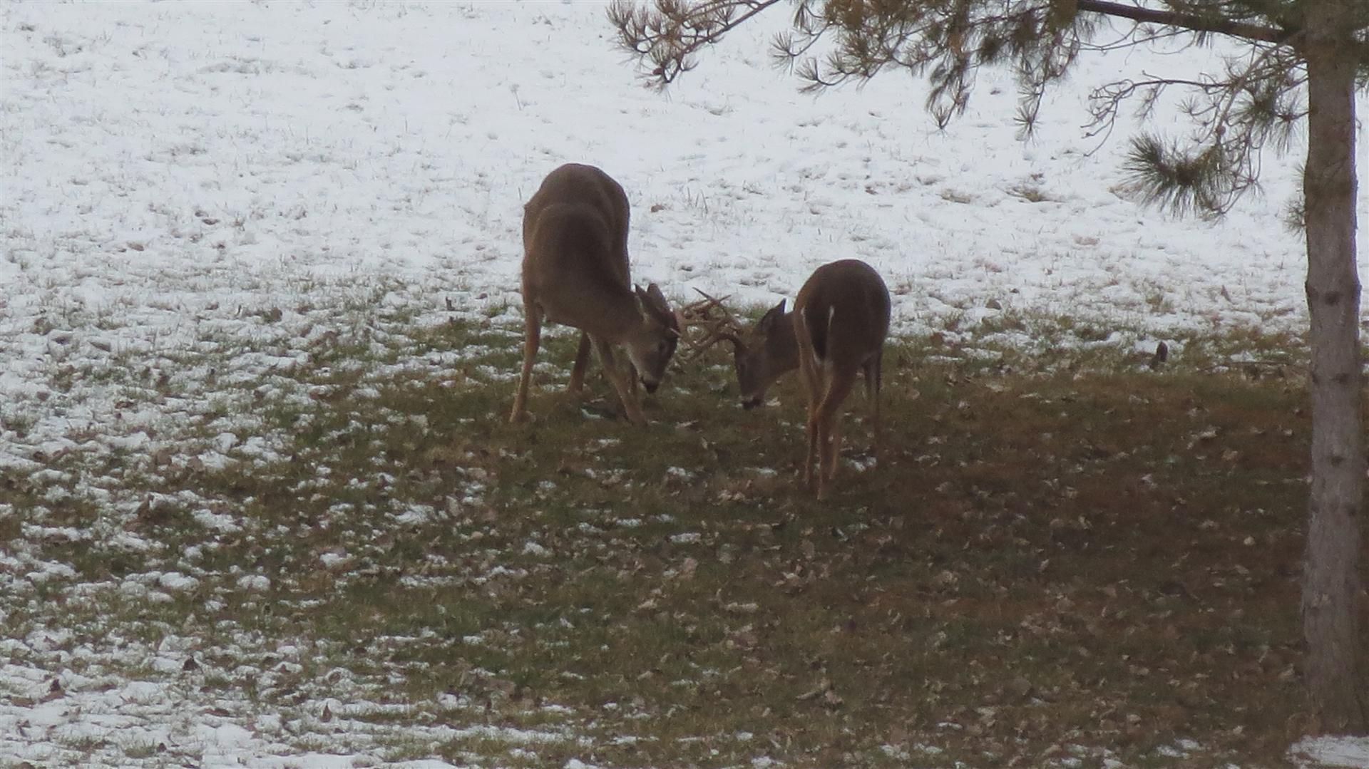 Bucks-28