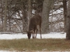 Bucks-39