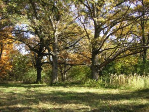hardwood trees on property for sale